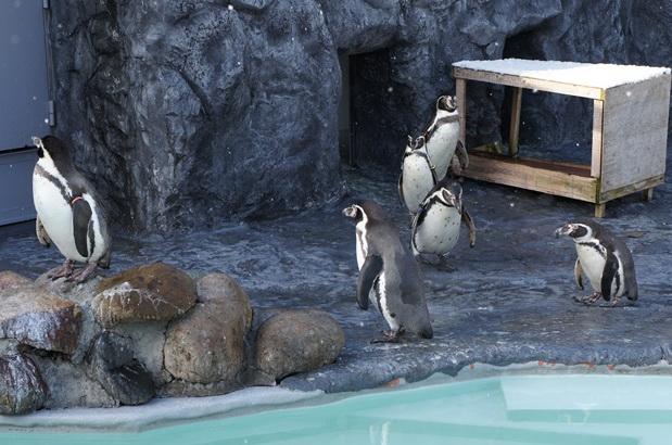 ผลการค้นหารูปภาพสำหรับ สวนสัตว์มารุยามะ(Maruyama Zoo)